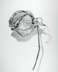 Pencil, Charcoal